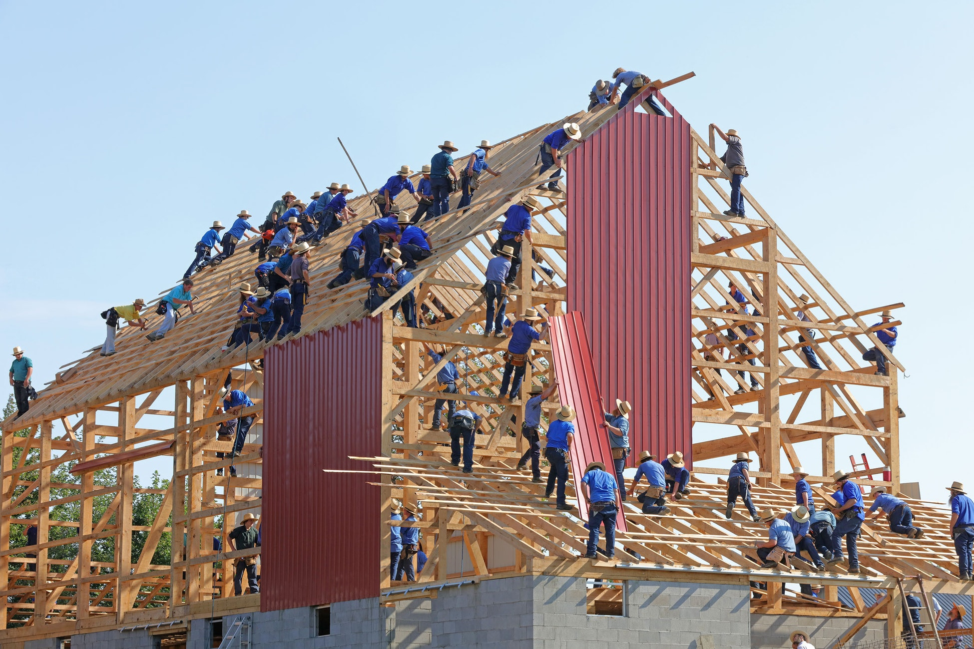 Several dozen Amish people involved in the framing process work atop a huge structure (probably a barn).